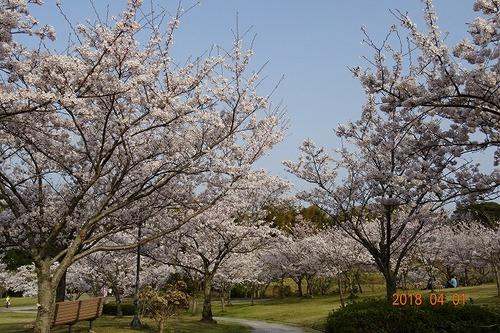 淡路島公園〜花見日和
