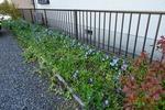 駐車場の花壇