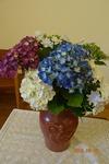 6月の花 あじさい