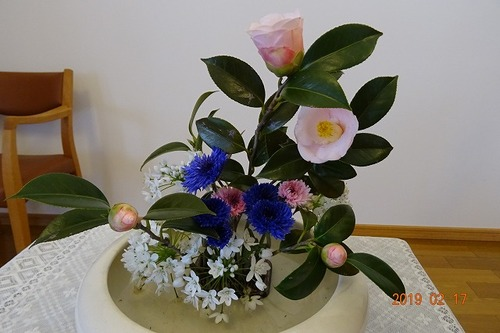 2月第3週 講壇の花