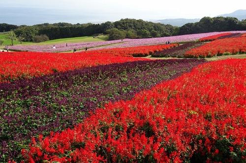 秋の花さじき2(※10月29日)