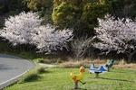 3月末 桜満開