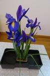4月18日 講壇の花