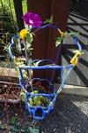 朝顔 こぼれ種から育った花