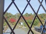 (教会の向かいの山の)うるしが真っ赤に色づきました