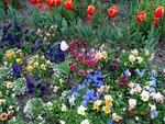 ハイウエイオアシス 春の花壇